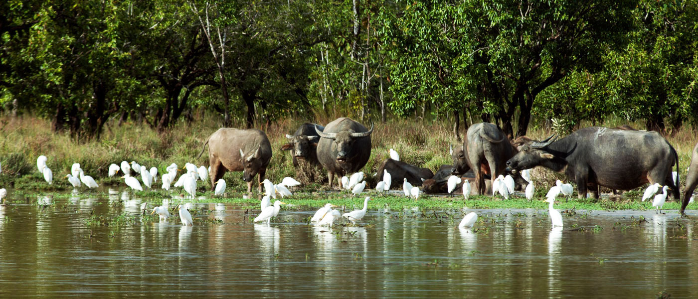 Most of the large mammals of the forest have been lost including elephant, tiger and large herds of wild cattle.